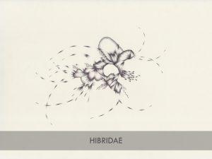 hibridae